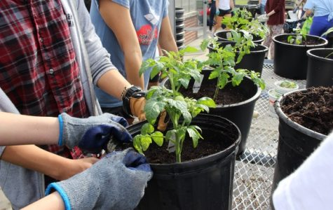 During a meeting, Garden Club members participate in outdoor planting.