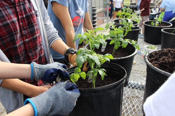 Garden Club helps TMHS go green