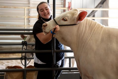 An FFA member shows her love for her cow.